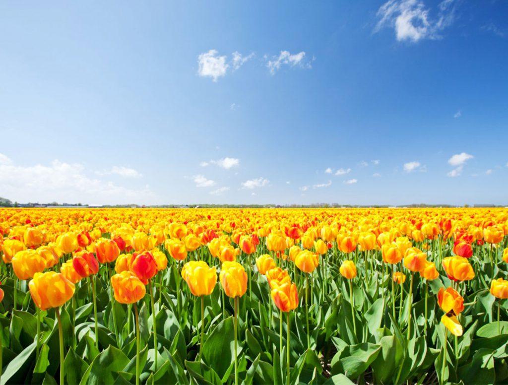 Milieuplatform bloembollenteelt